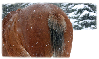 Horse Behind Greeting Card