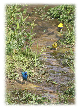 Special Blue Bird  Greeting Card