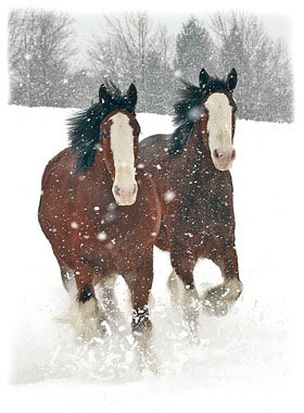 Two Horses Running Greeting Card