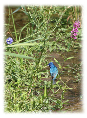 That special blue bird ... Greeting Card