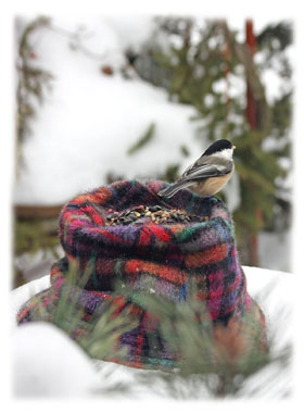 Bird on a hat ... Greeting Card