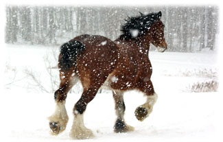 Horse Running Away ... Greeting Card