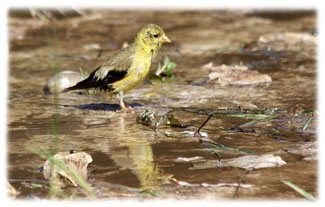 Birds shadow in water ... Greeting Card