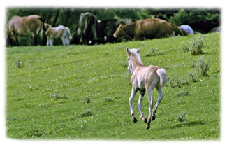Baby horse running ... Greeting Card