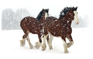 My two favorite horses ... Greeting Card