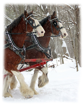 Clydsdales  Greeting Card