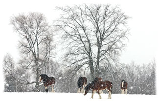 Horses on the hill ... Greeting Card