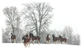 Trees behind the horses ... Greeting Card