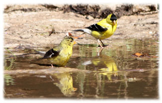 Two birds and their shadows ... Greeting Card