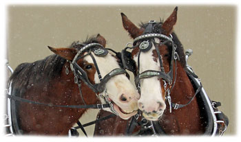 horses kiss Greeting Card